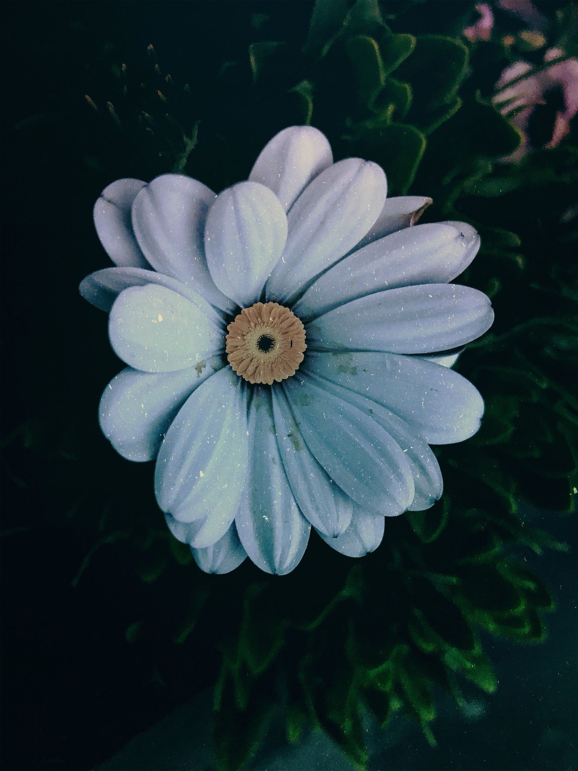plant, flower, flowering plant, flower head, freshness, growth, fragility, inflorescence, vulnerability, beauty in nature, petal, close-up, nature, focus on foreground, no people, day, white color, outdoors, botany, pollen