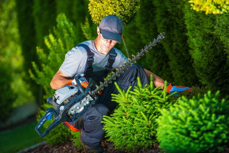 Man trimming hedge with clippers at garden
