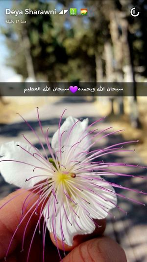 Deya ( رمضان_كريم Deya.dudu👻 Lovely يا رب Have A Nice Day! Flowers Palestine Enjoying Life Hello World EyeEm Taking Photos ستاد_دورا Love This  Hebron Snapchat ضيفوني سناب ❤ كل_عام_وانتوا_بخير_جميعا )