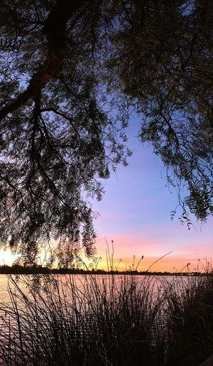 Twilight behind tree Lake Elizabeth Fremont Twilight Sky Nature Tranquility Tree Sunset