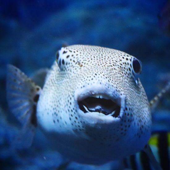 Underwater Animal Wildlife Animals In The Wild Close-up One Animal Sea Life UnderSea Animal Themes No People Portrait Sea Swimming Day Nature Outdoors Water Mammal Beauty