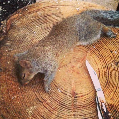 Killed A Squirrel