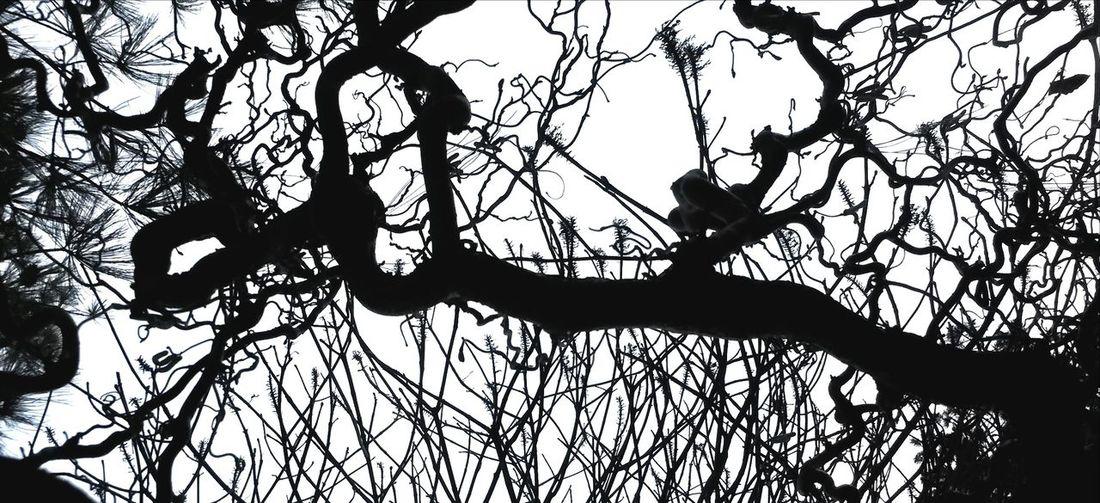 Beauty In Chaos Light And Shadow Streetphotography The Illuminator - 2014 EyeEm Awards
