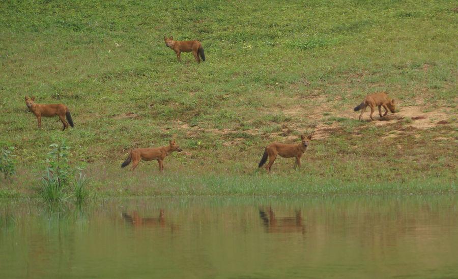 Day Field Grass Mammal Medium Group Of Animals Nature Outdoors Wild Dogs