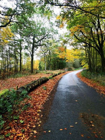 Road amidst leaves during autumn