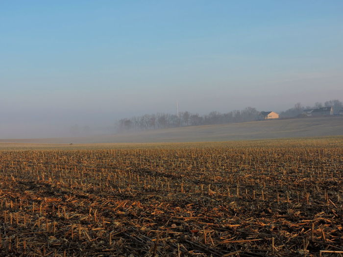 Foggy Mornings Fog Landscape Sky Land Field Beauty In Nature Environment Tranquil Scene Tranquility Plant Scenics - Nature Agriculture Rural Scene No People Nature Farm Growth Copy Space Tree Plantation Corn Fields