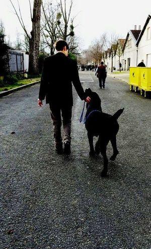 My Love Guardian Popular Photos I Love My Dog Cane Corso Italian Mastiff Dogs Of EyeEm