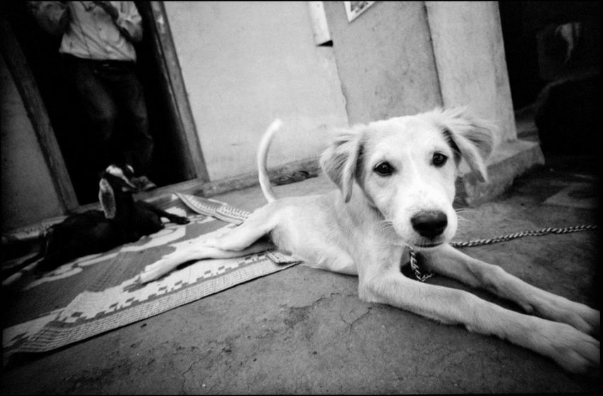 Life in a village in Maharashtra Analogue Photography Goat India Indian Bread Making Indian Gods Indian Hut Maharashtra Samsherpur Stove Travel Black And White Do More Documentary Dog Dog Life Dog Petting Grain Indian Bread Kitchen Simple Life Village Village Life