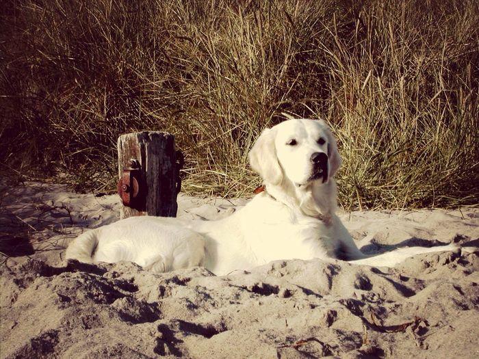 Love R.I.P. Cute Pets Dog Favorite Art Beach Photography