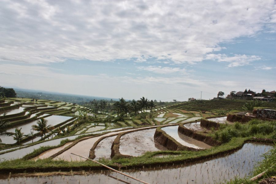Jatiluwih, World Heritage b y UNESCO in Bali agreculture Growth lHigh Angle View eLandscape pReisterrassen e dRice Terraces eRural Scene nTranquil Scene nTravel Destinations nWeltkulturerbe bWorld Heritage Site By UNESCO CO