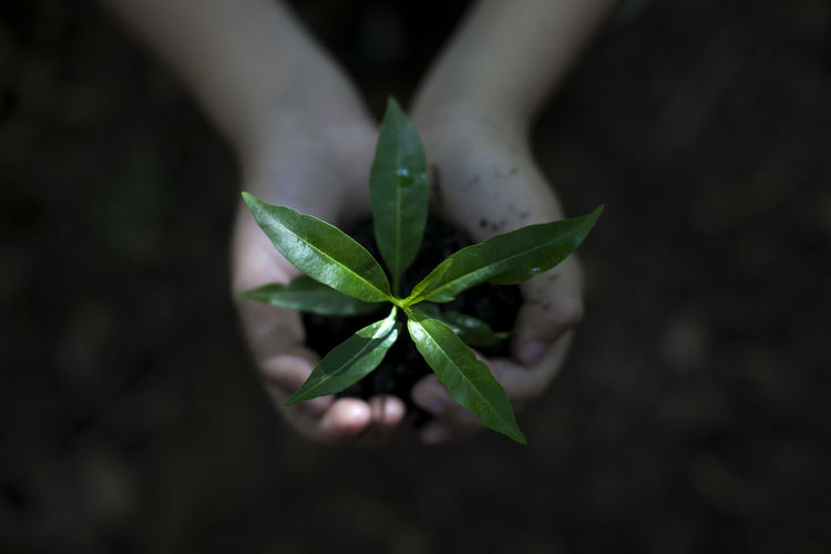 A Young Boy Cradling a Tree Sprout Agriculture Beauty In Nature Close-up Day Earth Day Environment Freshness Green Color Growth High Angle View Human Hand Leaf Nature New Life No People Outdoors Plant Plant Sapling Seeding