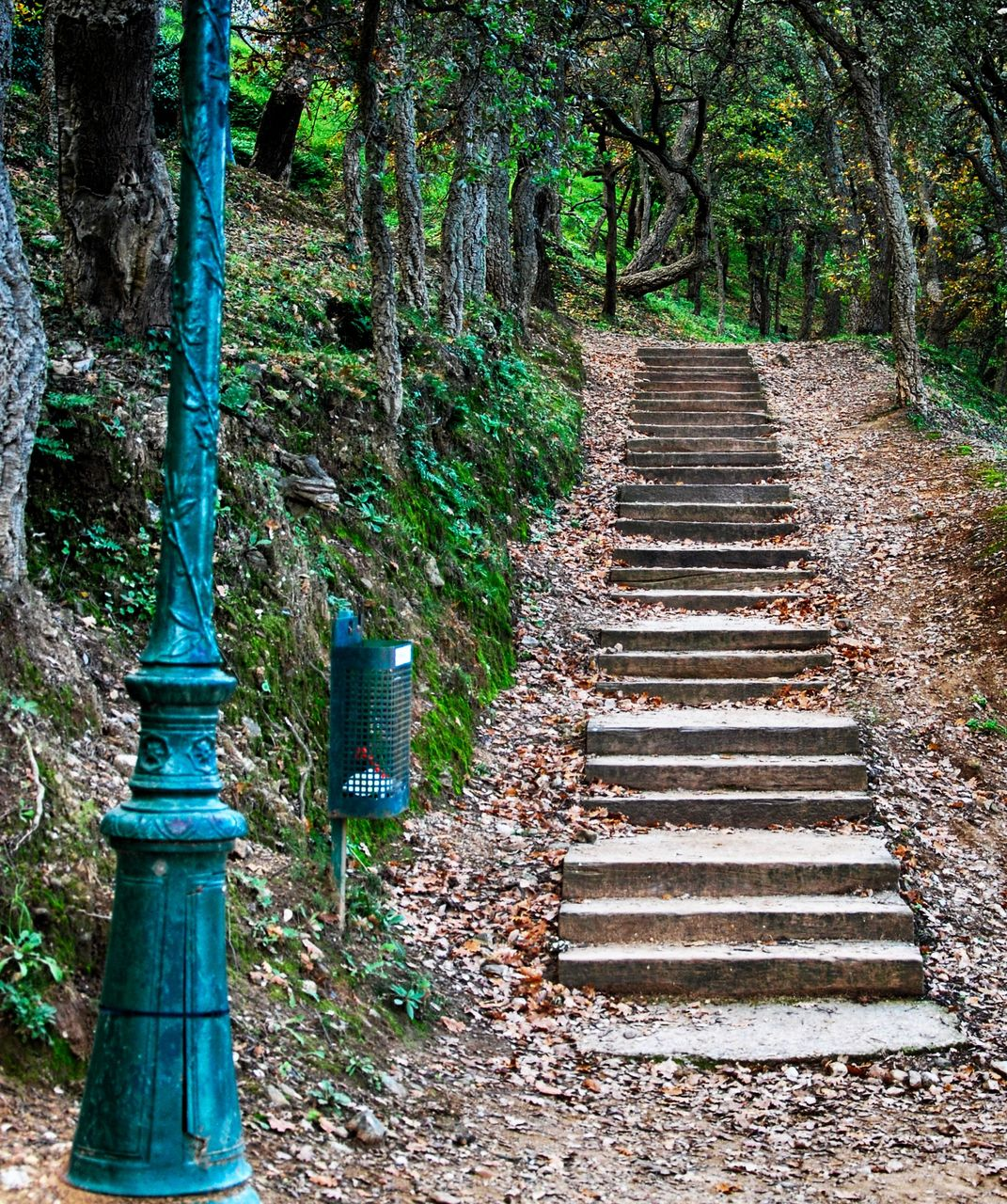 steps, steps and staircases, staircase, tree, no people, day, forest, outdoors, tranquility, tree trunk, nature, architecture