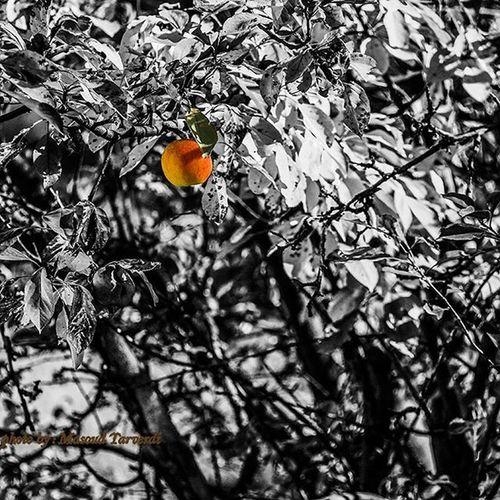 Photo by: Masoud.tarverdi سیب باغ عکس عکاسی شب درخت مسعودتاروردی مسعود_تاروردی Masoudtarverdi Masoud_tarverdi Apple Tree Trees Photo Streetphotography