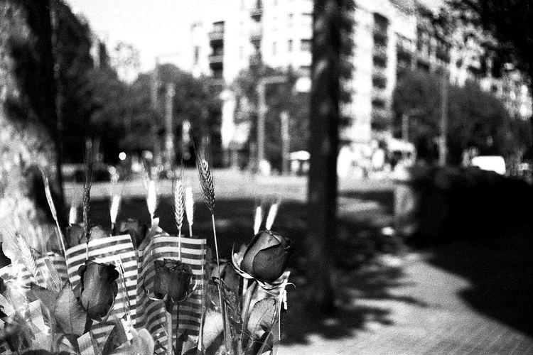 St. Jordi 2016 a Barcelona Barcelona Blackandwhite Blancinegre Blancoynegro Catalunya Daffkehollstein Filmisnotdead Filmphotography Santjordi Santjordi2016 Streetphotography