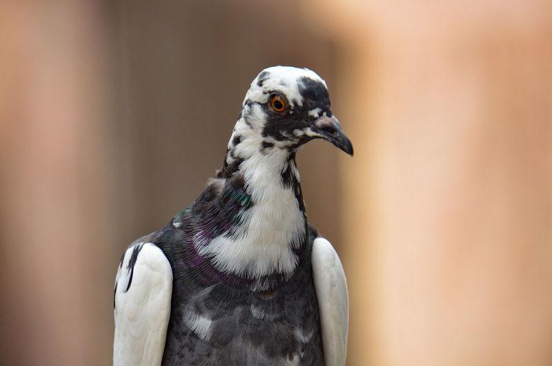 Te miro Bird Of