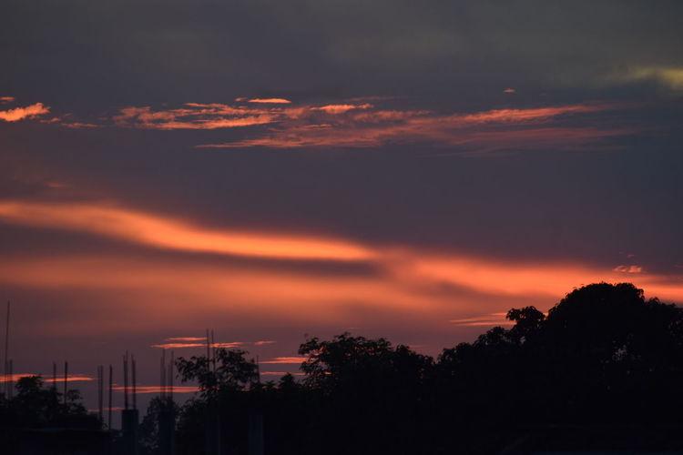clouds Tree