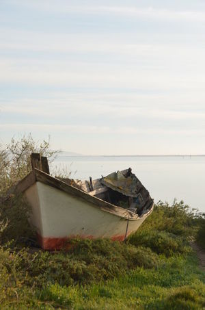 Abandoned Beach Beauty In Nature Boat Day Grass Horizon Over Water Longtail Boat Mode Of Transport Moored Nature Nautical Vessel No People Outdoors Scenics Sea Sky Sunken Tranquil Scene Tranquility Transportation Tree Water