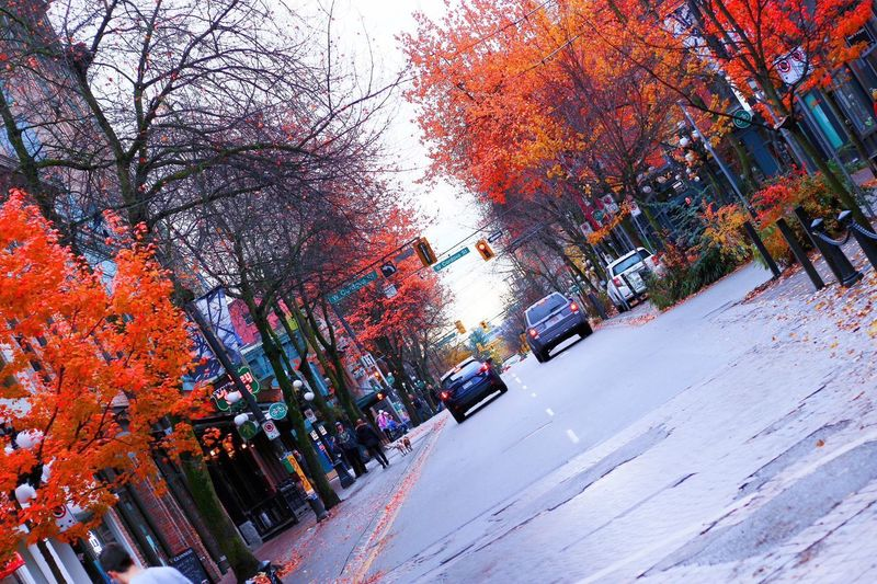 Autumn Tree Change Leaf Nature Outdoors Car Street No People City Road Branch Multi Colored Day Scenics Beauty In Nature Sky Canada Canada Photos Vancouver Vancouver BC 紅葉