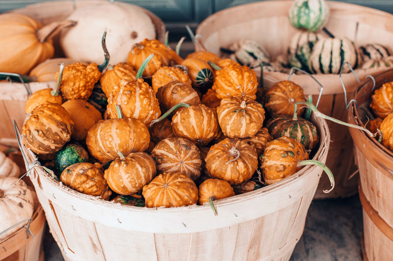 Thanksgiving and halloween holiday preparations. red, yellow, green pumpkins in baskets on farm
