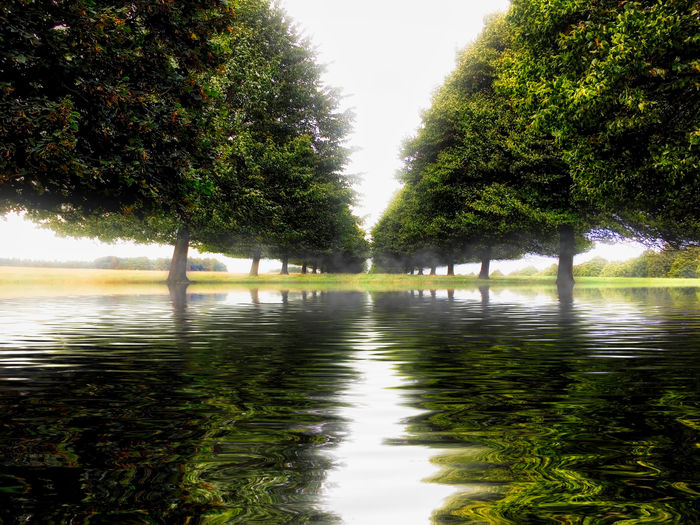 Tree line reflection Water Tree Plant Nature Reflection Tranquility Lake Beauty In Nature No People Growth Tranquil Scene Waterfront Day Scenics - Nature Outdoors Sky Green Color Idyllic Flowing Water Treelined