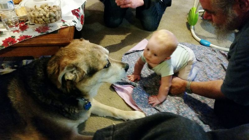 Mr Buddy meets my niece Sage Dog Meets Baby Dog And Baby Eye4photography  Mr Buddy Cute Pets Cute Baby