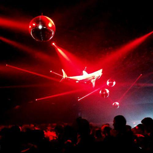 Disco Shark Disco Ball Mirror Ball Techno Party Yuma Tent Coachella Coachella2015 Partying Party Time