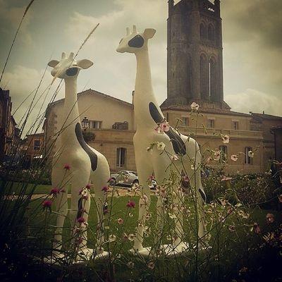 Les Girafes  de Saint Emilion