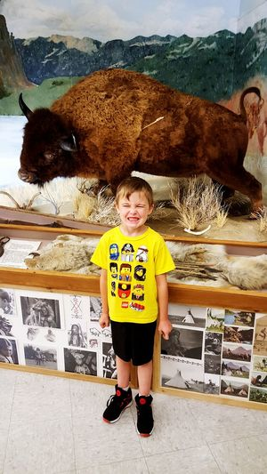 Buffalo My Silly Boy Museum Taking Photos Wildlife Wild Animal Huge Stuffedanimal Dead Familyday
