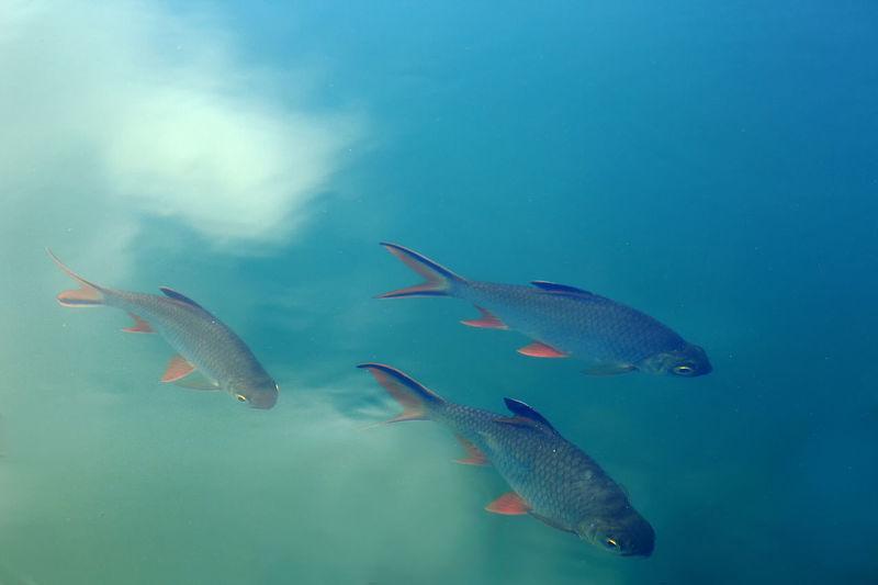 Fish swimming in sea water