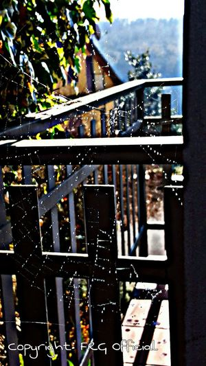 Taking Photos Check This Out Hello World Relaxing Enjoying Life Hdr Edit Frg_official Sunnyday Nature City_nature Web Dew Sun_in_the_dew Without_spider Samsung Galaxy S6 Edge