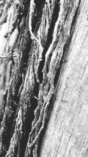 Abstract Nature Wood - Material Distressed Wood Abstract Photography Weathered Macro Photography Macro_collection Macro Beauty Distressed Knotted Wood Beauty In Nature Textured  No People Pattern Full Frame Backgrounds Black And White Collection  Blackandwhite Abstractions In BlackandWhite
