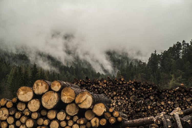 Logs are piled and prepared for transport in pian da lago cortina.