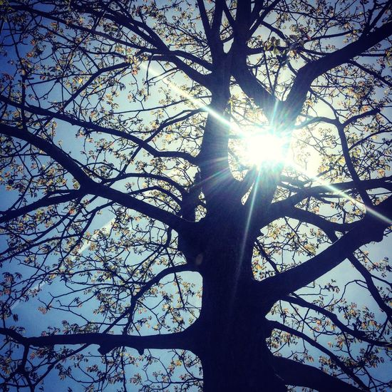 Springtime Tree Branch Sunlight Plant Low Angle View Sun Nature Day Sky No People Beauty In Nature Silhouette Outdoors Streaming Sunny Tranquility