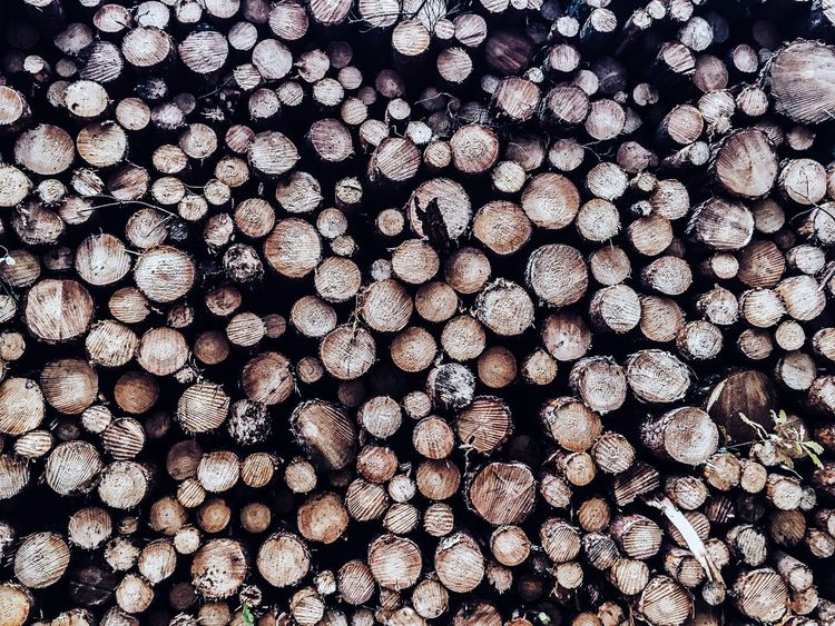 Wood Wooden Tree Trees Textured  Texture Textures Backgrounds Simplicity EyeEm Best Shots - Nature EyeEm Best Edits EyeEm Gallery EyeEm The Week On Eyem The Week Of Eyeem Eye4photography  EyeEm Nature Lover EyeEm Best Shots EyeEmBestPics EyeEmbestshots Eye4photography  Brown Eyem Gallery Eyeemphotography Eyemphotography