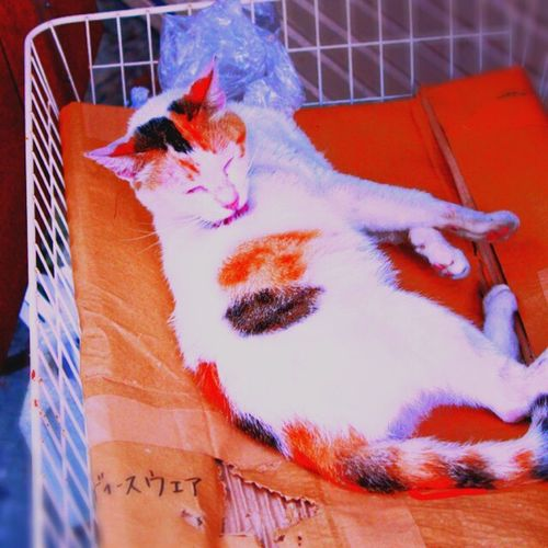 猫 ねこ ねこ Japan 日本 スナップ Snap Okinawa 沖縄 やちむん 壺屋 Tuboya