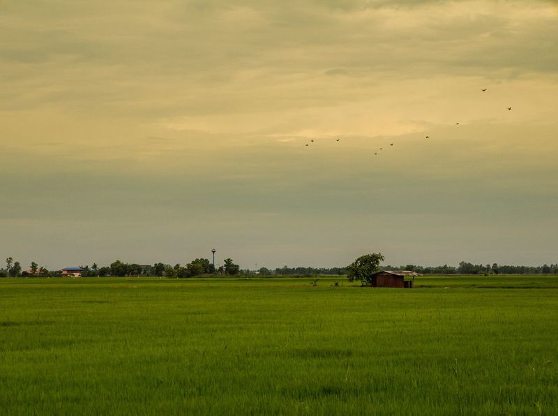 Agriculture Beauty In Nature Cloud Cloud - Sky Cloudy Cultivated Land Field Grass Grassy Green Color Growth Horizon Over Land Idyllic Landscape Nature No People Non-urban Scene Outdoors Remote Rural Scene Scenics Sky Sunset Tranquil Scene Tranquility
