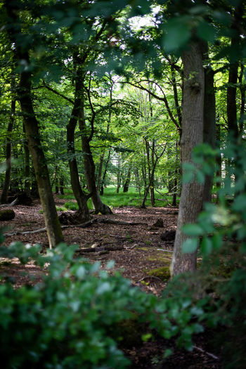 Auszeit an der Ostsee Beauty In Nature Day Focus On Background Foliage Forest Green Color Growth Land Nature No People Outdoors Plant Scenics - Nature Selective Focus Tranquil Scene Tranquility Tree Tree Trunk Trunk WoodLand