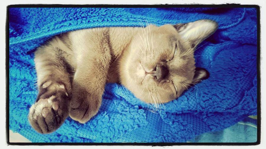 Сладких снов!)