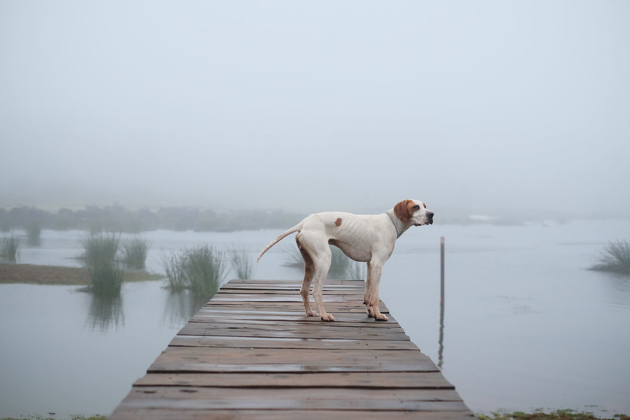 Dog on pier over lake against sky during foggy weather