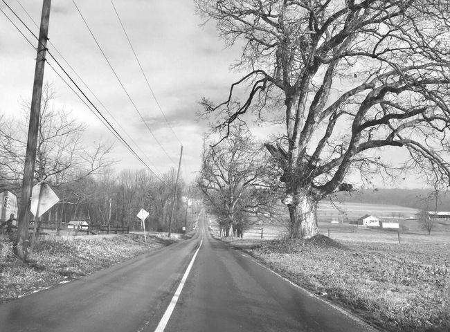 Black & White Beauty In Nature Honey Brook Pennsylvania Road Bare Tree Tree Transportation The Way Forward Sky Street Day Outdoors No People Land Vehicle Nature Branch Architecture City