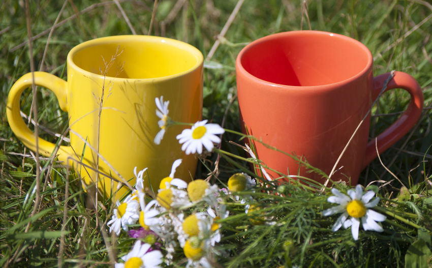 Coffee, Drink. Nature Outdoor Tea, Two, Close-up Cups Drink Flower Freshness Grass Growth Nature Outdoors Plant Yellow