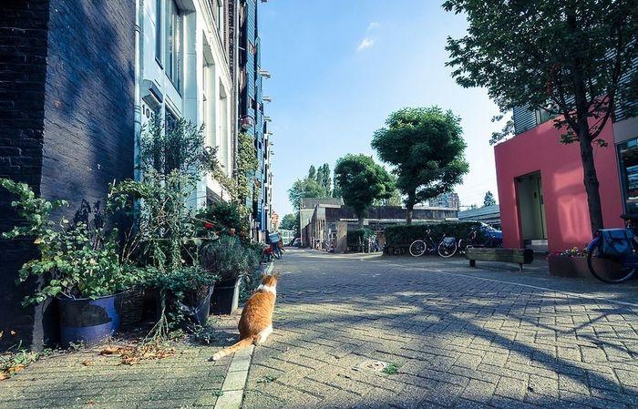 Amsterdam Animals Urban Landscape