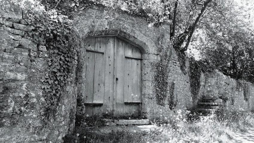 Bnw_friday_eyeemchallenge Bnw_doors Old Doors Ivy Nature Old Walls... Outdoors No People
