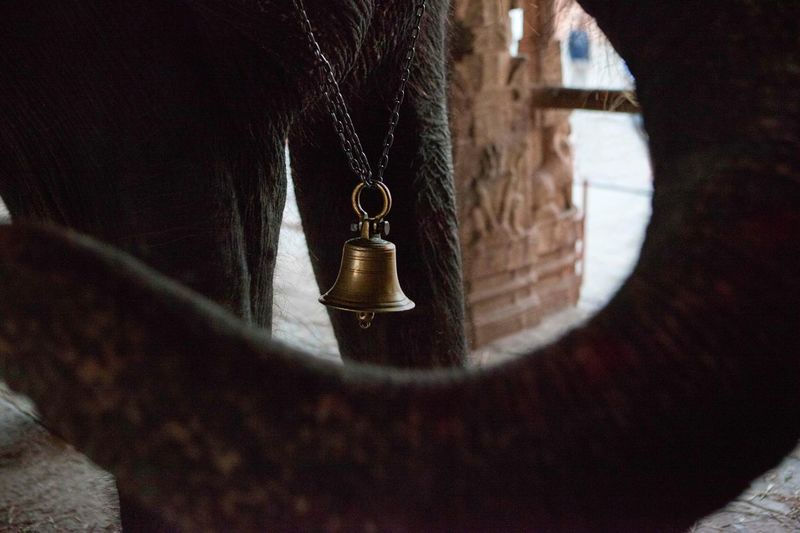 This is Lakshmi the blessing Elephant. Many holy men come from across India to visit Hampi's temples and recieve a blessing. The flow of his trunk creates a negative space that accentuates the brass bell that he rings after every blessing that makes for an appealing composition. nNegative SpaceAAsian CultureIIndia