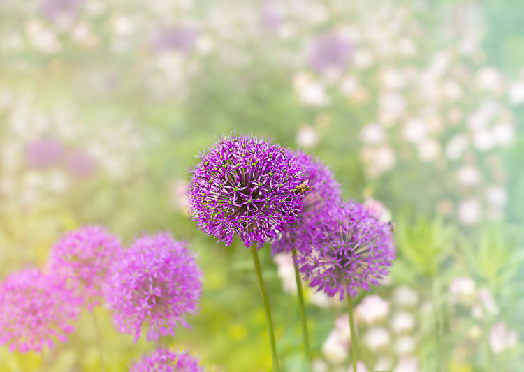 Close-up of purple flowering plant on field