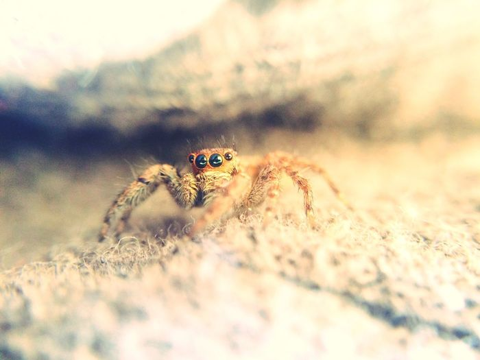 Micro photography of a spider