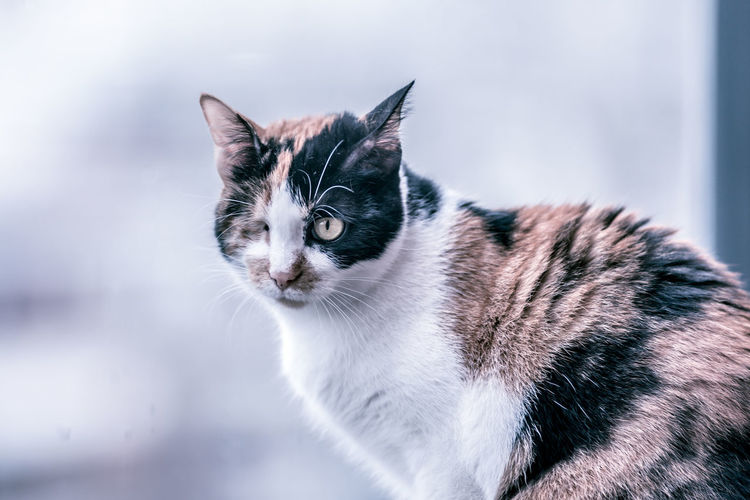 Alertness Animal Themes Close-up Companion Day Domestic Animals Domestic Cat Feline Mammal No People One Animal One-eyed Cat Outdoors Pets Tabby Cat Whisker