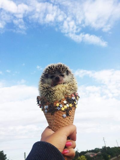 Cropped hand of woman holding porcupine in ice cream cone against sky