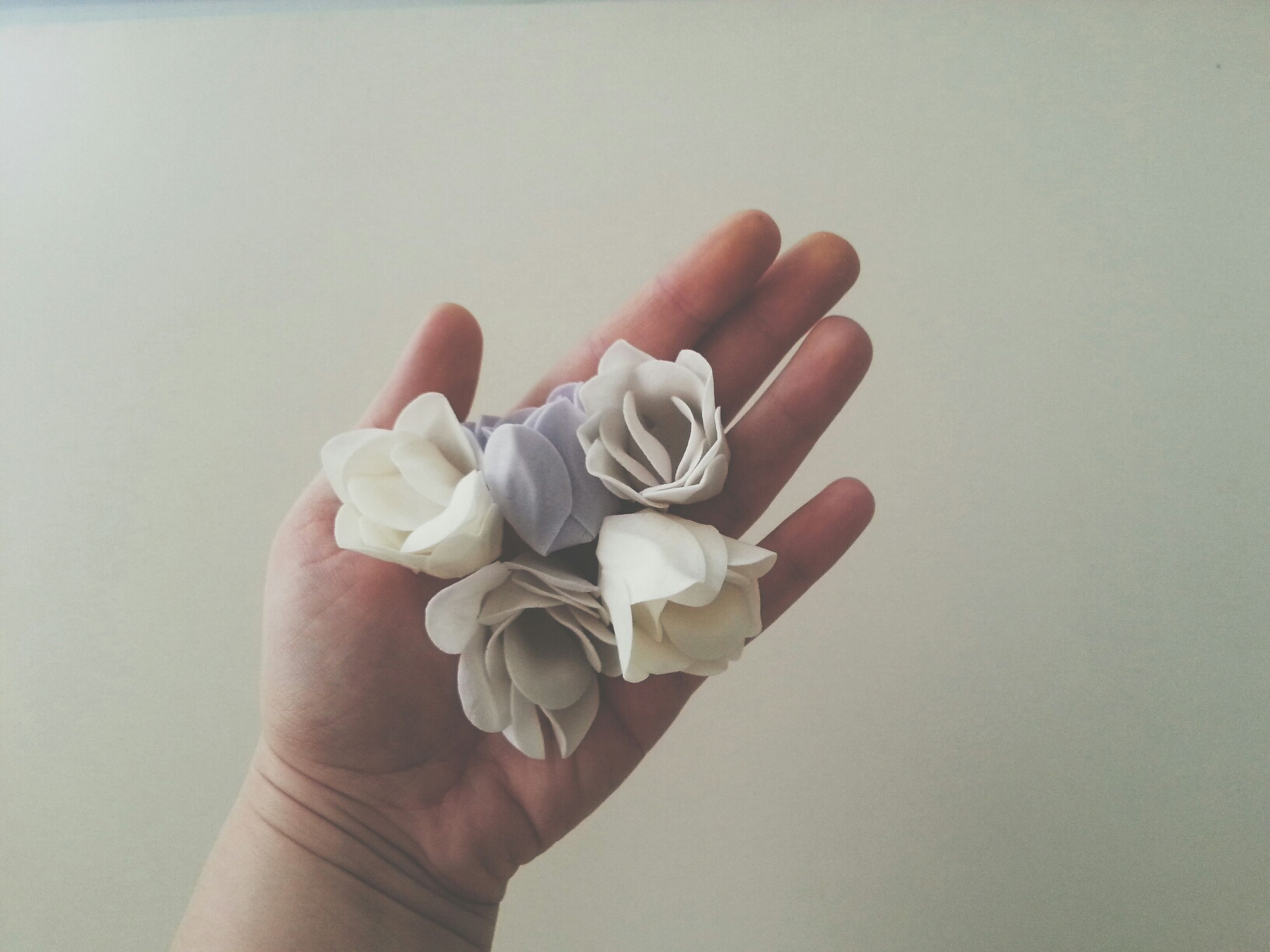 person, part of, studio shot, holding, human finger, indoors, white background, cropped, copy space, close-up, personal perspective, unrecognizable person, white color, lifestyles, showing, wall - building feature
