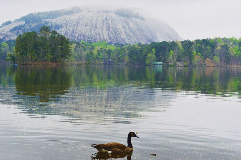 Goose Lake Stone Mountain State Park EyeEmNewHere EyeEm Selects